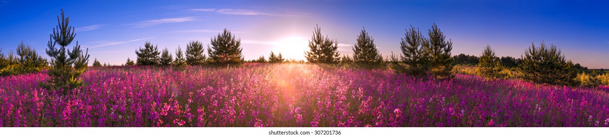 beautiful summer landscape with the blossoming flower meadow, sunrise.panorama wild flowers