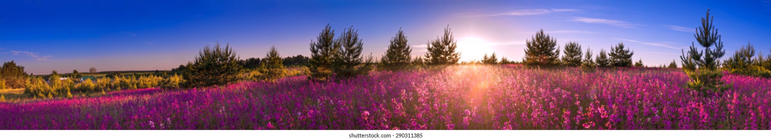 beautiful summer landscape with blossoming flowers meadow, sunrise.panorama wild flowers