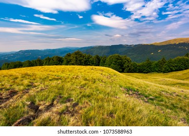 beautiful summer landscape of Carpathians. grassy slopes and forested hillsides. Ukrainian alps with Svydovets mountain ridge in the distance