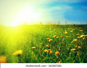 beautiful summer landscape with dandelions in foreground