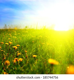 Beautiful Summer Landscape with Dandelions and Sunlight