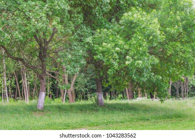Beautiful summer landscape with green colors. Nature in the vicinity of Pruzhany, Brest region,Belarus.