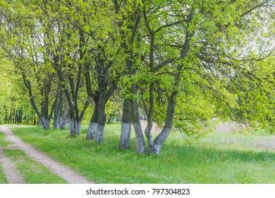 Beautiful summer landscape with green colors. Nature in the vicinity of Pruzhany, Brest region.