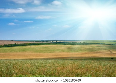 beautiful summer landscape, green field and bright cloudy sky