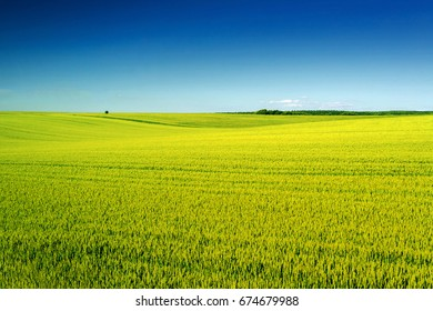 Beautiful summer landscape with green field and clear blue sky above.