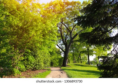 Beautiful summer landscape in the green park. Natural background.