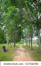 Beautiful summer landscape with green park. Nature. Copy space.