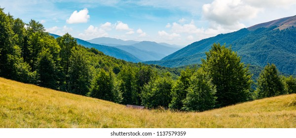 beautiful summer landscape in mountains. perfect countryside scenery with beech forest on a grassy hillside and mountain ridge in the distance