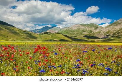 Beautiful summer landscape at Piano Grande (Great Plain) mountain plateau in the Apennine Mountains, Castelluccio di Norcia, Umbria, Italy