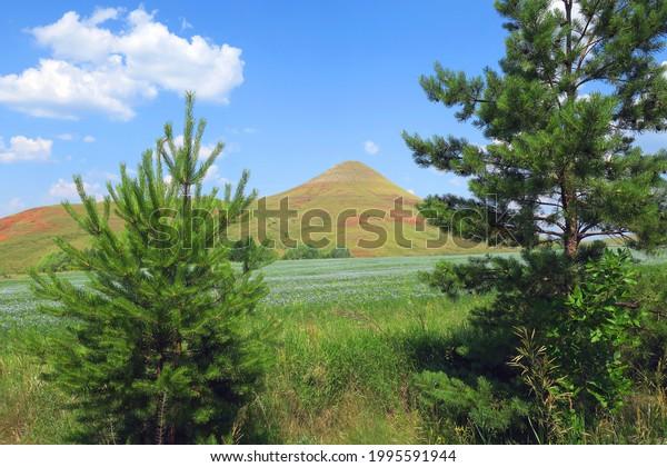 beautiful-summer-landscape-pines-meadow-
