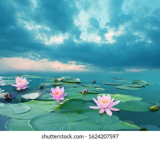 Beautiful summer landscape with pink lilies. Lake with water lily flowers. Blooming waterlily nymphaea flowers in pond