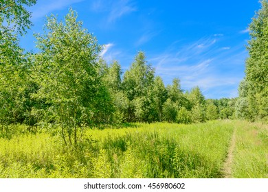 Beautiful summer landscape in Russia background