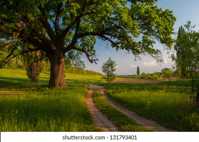 Beautiful summer landscape showing huge old oak beside country road.