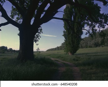 Beautiful summer landscape showing huge oak and country road.