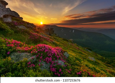 Beautiful summer landscapes in Carpatian mountains,many flowers,rhododendrons,sunset and sunrises,foggy vievs,dramatic sky