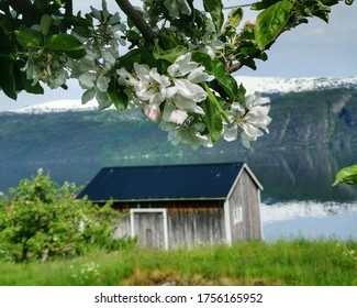 Beautiful summer landscapes and nature in Norway fy