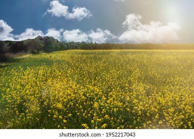 beautiful summer meadow in spring
