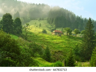 Beautiful summer morning in Carpathian Mountains (near Verkhovyna), Ukraine.