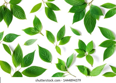 Beautiful summer nature pattern of green leaves branches with detailed texture. Greenery top view, flat lay.