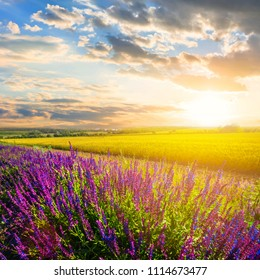 beautiful summer prairie with flowers at the sunset