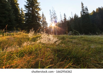 Beautiful summer scenery in the mountains, at sunrise