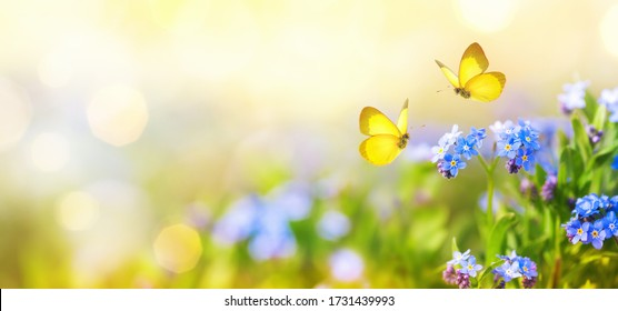 Beautiful summer or spring meadow with blue flowers of forget-me-nots and two flying butterflies. Wild nature landscape.
