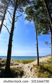 Beautiful summer sunny view of the Baltic Sea, sandy beach and pine forest with bright blue sky, Curonian Spit, Klaipeda, Lithuania. Path through forest to deserted beach without people. Landscape.