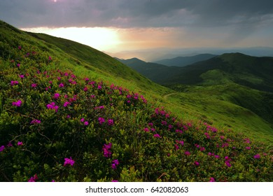 beautiful summer sunrise  landscape in the mountains, europe travel, wonderful world
