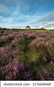 Beautiful Summer sunset landscape image of Bratley View in New Forest National Park England