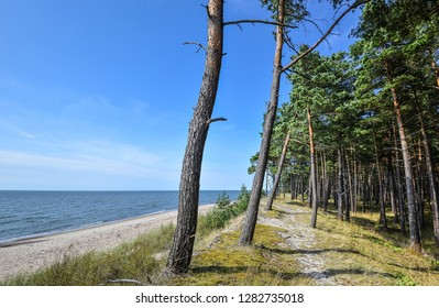 Beautiful summer view of the Baltic Sea, pebble beach and pine forest, Curonian Spit, Klaipeda, Lithuania. Summer sea landscape. Deserted beach without people.