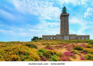 Beautiful summer view of the lighthouses at Cap Fréhel in Brittany, France, with vibrant heather flowers (Calluna vulgaris) and common gorse (Ulex europaeus)