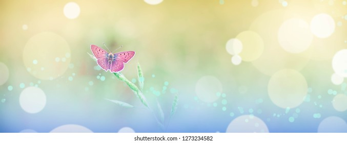 Beautiful Summer/Spring background