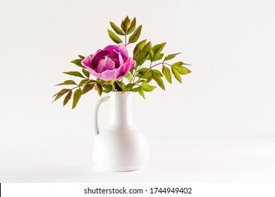 The beautiful and sumptuous flowering tree peony (Paeonia rockii or Paeonia suffruticosa rockii) in a white vase on white background. A flower with a wonderful scent. Flowering in may Uppland, Sweden