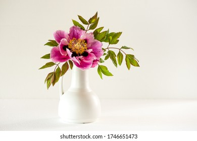 The beautiful and sumptuous flowering tree peony full blown (Paeonia rockii or Paeonia suffruticosa rockii) in a white vase on white background. A flower with a wonderful scent. Flowering in may