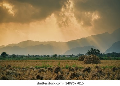 Beautiful sun crepuscular ray(beam) on the sky over paddy rice field, rice harvesting in the evening