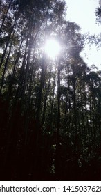 Beautiful sun, florest of Brazil.