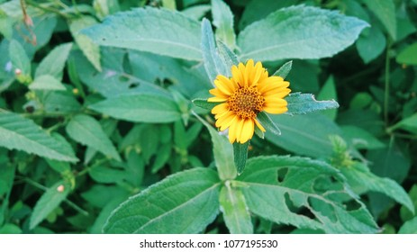 Beautiful sun flower with green plants