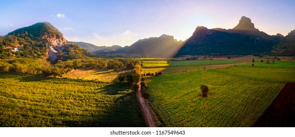 beautiful sun light on sunflowers and agriculture field in lime stone mountain valley lopburi central of thailand