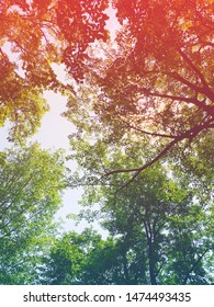 Beautiful sun light through trees in forest looking upwards with lighting effects