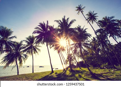beautiful sun light,tropical palm tree on the beach with sunset as back ground.travel and vacation concept.moder colour tone style.