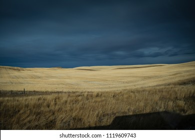 Beautiful sun lit field of grain with gold field and dark blue skies