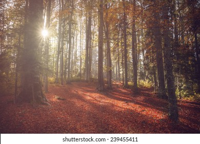 Beautiful sun rays coming through the trees in a forest during autumn