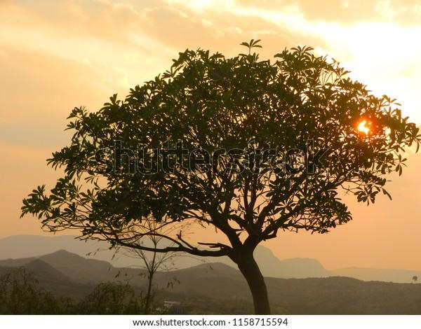 beautiful sun rays coming through neem tree in the evening time