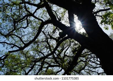 Beautiful Sun shine through the trees