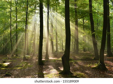 Beautiful sunbeams in magic beach forest - Poland