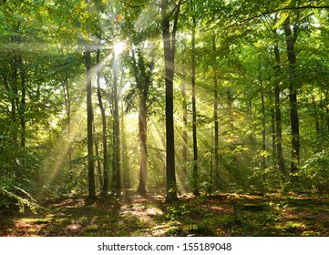 Beautiful sunbeams in magic beach forest - Poland