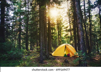 Beautiful sunbeams through the foggy forest. Amazing scene of campsite in the park with sun rays and fog. Morning shadows and lights, sun harp in woods. Camping place with yellow tent in sunny beams.