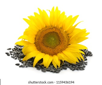 Beautiful sunflower and seeds on white background