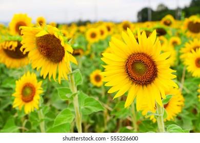 svensktalande porrfilm sunflower thai