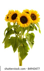 beautiful sunflowers  bouquet  isolated on white background